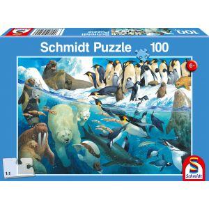 Tiere am Polarkreis
