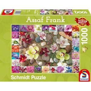 Assaf Frank: Orchideen